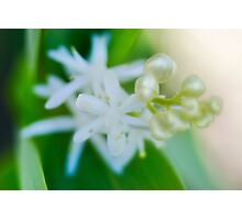Pearl Flower Photographic Print