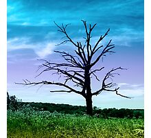 Dead Tree in Meadow Colorized Photographic Print
