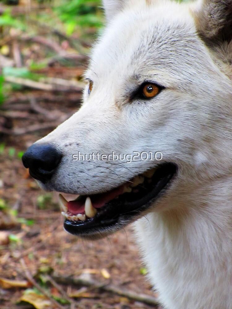 White Wolf by shutterbug2010