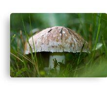 Mushroom Up Close Canvas Print