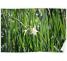 White Flower in Green Reeds Poster