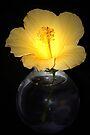 Yellow Hibiscus by RebeccaBlackman
