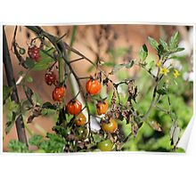 Wilted Tomatoes Poster
