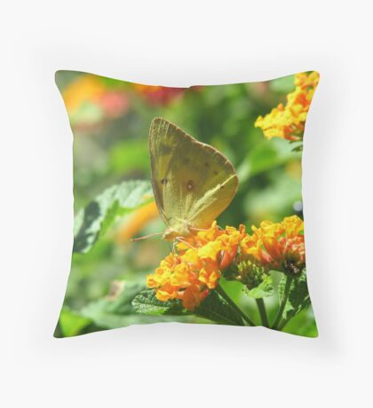 Orange Sulpher Butterfly Throw Pillow