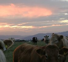 Cow sky Derry Ireland by mikequigley