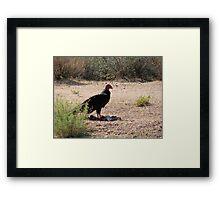 """""""Dinner is served"""" Turkey Vulture Framed Print"""