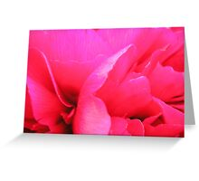 Crimson Peony Rose Greeting Card
