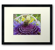 Bee~autiful Passion Flower Framed Print