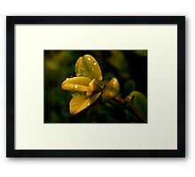 Dew Drop Tapestry Framed Print