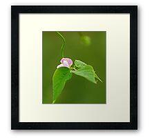 kidney bean'flower Framed Print