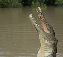 Crocodile Dance by bbatch
