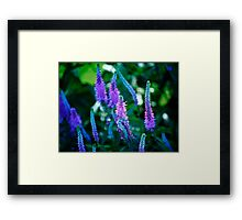 Spike... Framed Print
