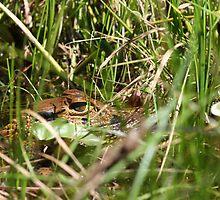 Swamp Eyes by bbatch