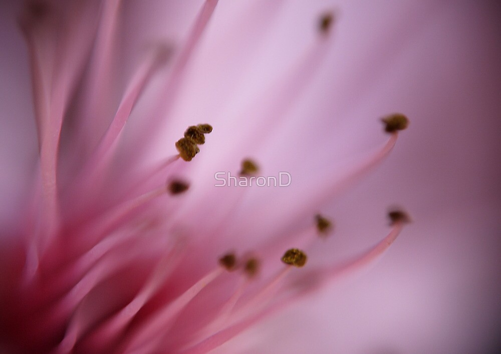 Plum Blossom by SharonD
