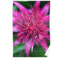 Hot Pink Flower  Poster