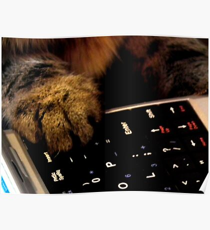 Cat paw on keyboard Poster
