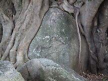 tree trunk grown over rock by Bernie Stronner
