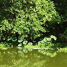Green Land by WildestArt