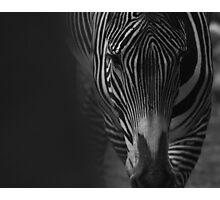 Zebra, animal head, black and white Photographic Print
