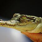 Baby Croc by JessicaGillan