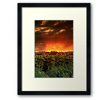 August Sunflower Skies Framed Print