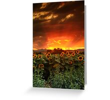 August Sunflower Skies Greeting Card