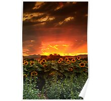 August Sunflower Skies Poster