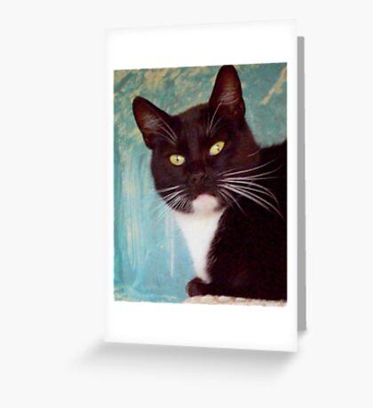Lady Stray Greeting Card