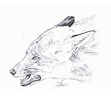 Angry Fox Sketch Photographic Print