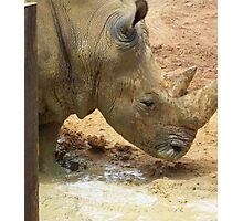 Old Timer - Rhino at the Zoo Photographic Print