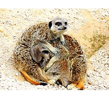 Meerkat Pile Photographic Print
