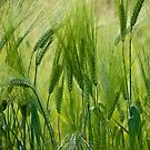 Views 5201 ♥ ♥ ♥ ♥ series . Green Green Grass Of Home. Tom Jones & Brown Sugar Story.  by © Andrzej Goszcz,M.D. Ph.D