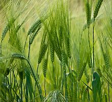 Views 5201 ? ? ? ? series . Green Green Grass Of Home. Tom Jones & Brown Sugar Story.  by © Andrzej Goszcz,M.D. Ph.D