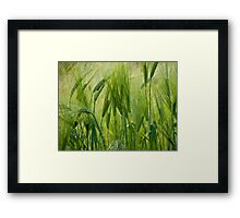 Views 5201 ♥ ♥ ♥ ♥ series . Green Green Grass Of Home. Tom Jones & Brown Sugar Story.  Framed Print