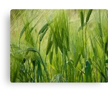 Views 5201 ♥ ♥ ♥ ♥ series . Green Green Grass Of Home. Tom Jones & Brown Sugar Story.  Canvas Print