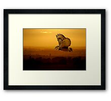 Eagle owl and the sunset Framed Print