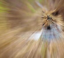 Leopard radial blur - Mala Mala South Africa by ShaunWalton