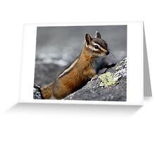A Curious and Hungry Critter Greeting Card