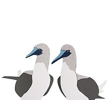 Blue-Footed Boobies by thesilkmoth