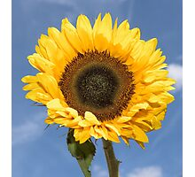 Sunflower Sky Photographic Print