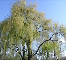 willow tree by marasdaughter