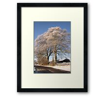 A Frosted tree near Bowness Framed Print