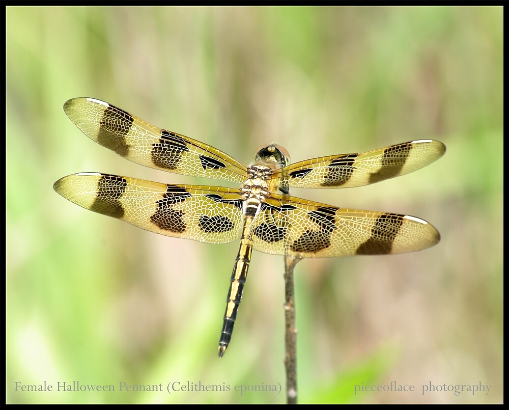 Female Halloween Pennant... by pieceoflace