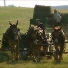 A Day on the Amish Farm by hcorrigan