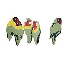 Lovebirds Photographic Print