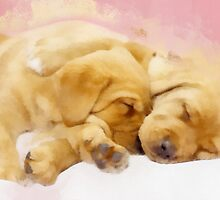 Sleeping Puppies  by rok-e