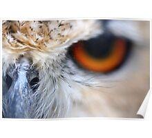 Nosey Owl - Bengal Eagle Owl Poster