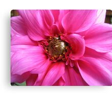 Perfection in Pink - Dahlia Macro Canvas Print