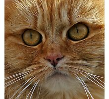 SeaSide Cat Photographic Print