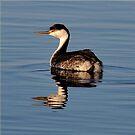 OREGON BIRDS  GREBE by RoseMarie747